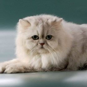461563-cats-white-cat-with-green-eyes