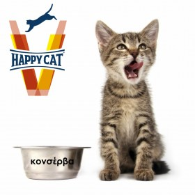 vet happy cat-wet