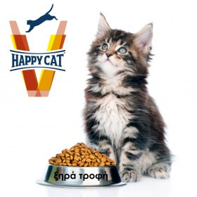 vet happy cat-xira